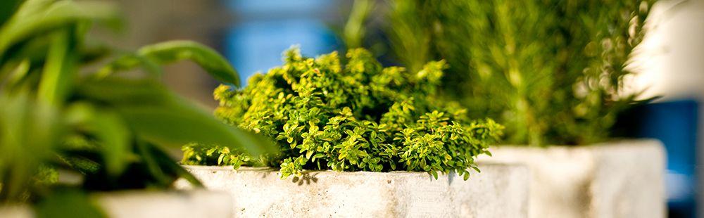Bluhende Topfpflanzen Gartnerei Wenz